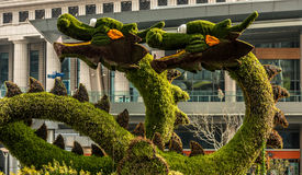 Dragons sculptured trees in pudong shanghai china Royalty Free Stock Photography