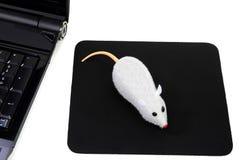 Drahtlose Maus mit zwei Tasten, lustige Computerabbildung Stockbilder