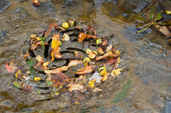 Drain in autumn royalty free stock photography
