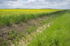 Drain canal beside rapeseed field in bloom. At La Serena, Extremadura, Spain royalty free stock images