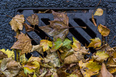 Drain cover in autumn Royalty Free Stock Photography