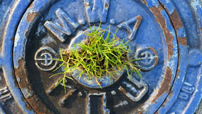 Drain manhole cover. Grass on  a drain manhole cover Royalty Free Stock Photography