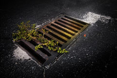 Drain in road Stock Photos