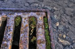 Drain. Rusty drain channel with puddles Royalty Free Stock Images