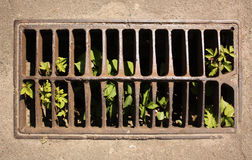 Drain on street with green plantlet Stock Photos