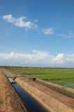Drain system. Rice field with good drainage watering system royalty free stock image