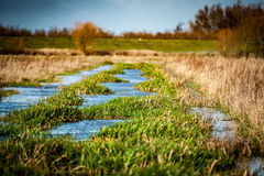 Drainage channel and vegetation Stock Photo