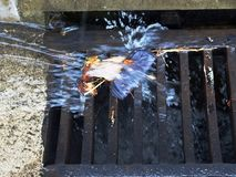 Drainage de précipitation exceptionelle Photo libre de droits