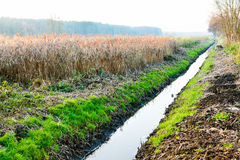 Drainage ditch in autumn scenery. Drainage ditch channel to save lowland fields from flooding Stock Image