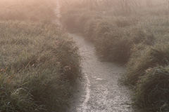 Drainage Ditch and Fog Stock Images