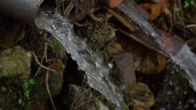 Drainage water flows from a plastic pipe in the forest.