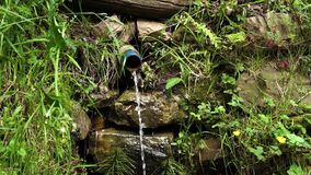 Drainage water flows from a plastic pipe in a forest with a stone wall and green grass