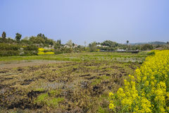 Drained lands before hillside village in sunny spring. Chengdu,China Royalty Free Stock Photo