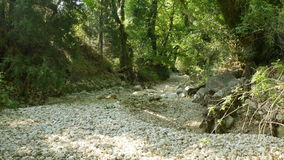 Drained River Rocks. White rocks on a dry riverbed in the forest stock video footage