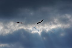 Drakar i himlen 2 Arkivbild