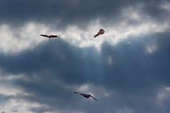 Drakar i himlen 3 Royaltyfri Fotografi