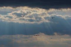 Drakar i himlen 5 Arkivbilder