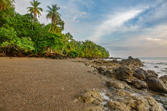 Drake bay beach wide angle view, pacific ocean. Wide angle view of pacific ocean, beach and palm tree forest in Drake Bay, Costa Rica Royalty Free Stock Image