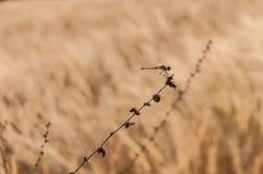Drake-fluga Fotografering för Bildbyråer