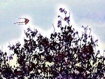 Drake som flyger över och nära överkant av trädet stock illustrationer