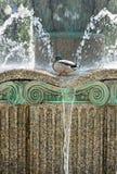 Drake w fontannie wśród pluśnięć i kropel woda Fotografia Royalty Free