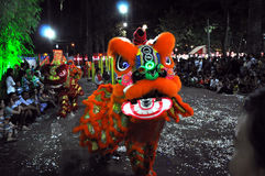 Drakedans under Tet det mån- nya året i Vietnam Arkivbilder