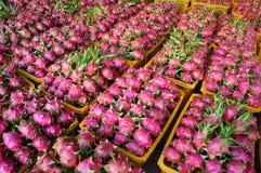 Drakefrukt, jordbruksprodukt, Vietnam Royaltyfri Bild