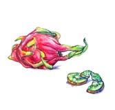 Drakefrukt och kiwi royaltyfri bild