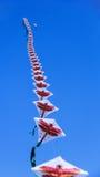 Drakehimmelblått Fotografering för Bildbyråer