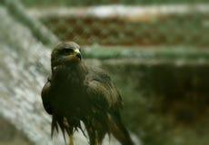 Draken Royaltyfria Bilder