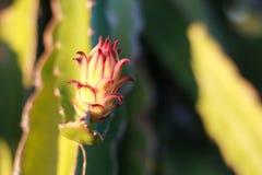 Draken blommar i trädgården arkivfoto