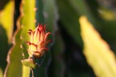 Draken blommar i trädgården Royaltyfria Bilder