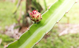 Draken blommar i trädgården royaltyfri foto