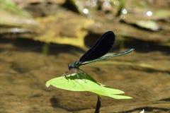 Draken op een blad worden neergestreken dat stock afbeelding