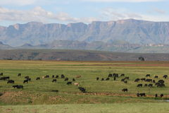 Drakensberg Royalty Free Stock Photo