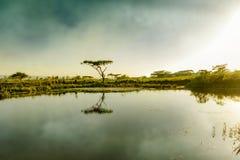 Drakensberg gór Południowa Afryka wodopoju drzewo Zdjęcie Stock