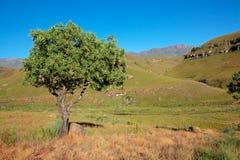 Drakensberg mountains and tree Stock Photos