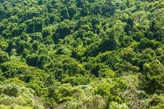 Drakensberg naturlig skog Arkivfoton