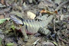 drakeskog Arkivbild