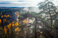 Dramatic Autumn Forest with trees on foreground Royalty Free Stock Photos