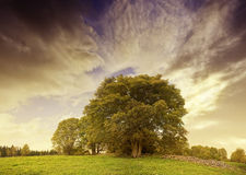 Dramatic autumn sunset above pasture landscape Royalty Free Stock Image