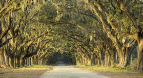 Dramatic avenue of oaks Stock Photo