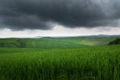 Dramatic beautiful view of green fields and meadows at sunset in Tuscany stock photo