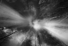 Dramatic black and white autumn trees with light leak background royalty free stock photos