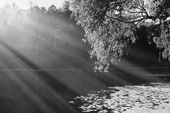 Dramatic black and white park lake landscape background stock photos