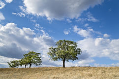 Dramatic Blue Sky, Meadow and a tree Royalty Free Stock Photography