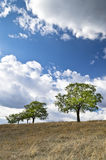 Dramatic Blue Sky, Meadow and a tree Stock Photos