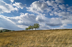 Dramatic Blue Sky, Meadow and a tree Stock Photo