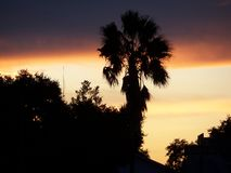 Dramatic bruise colored clouds of a Florida sunset. Dramatic bruise colored clouds and a palm tree look ominous in the Florida sunset royalty free stock photography