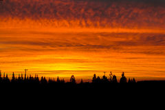 Dramatic burning sunsset above the forest Stock Photography